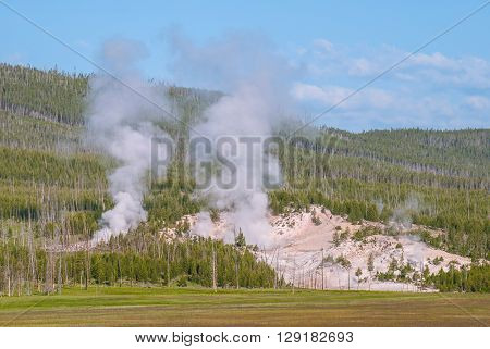 Steam rises from the earth in the area of Norris Geyser Basin Yellowstone National Park