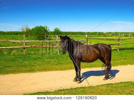 beautiful rural horse grazing near the road