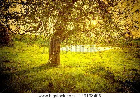 Vintage image. landscape with tree on the field