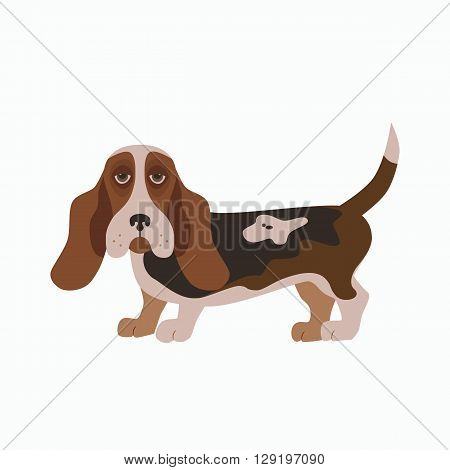 Flat basset hound pet illustration. Standing cute dog vector. Flat dog animal pet vector icon. Home cartoon standing basset hound in flat style. Dog colorful silhouette isolated on white background
