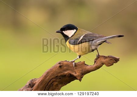 Beautiful bird perched on a log in nature