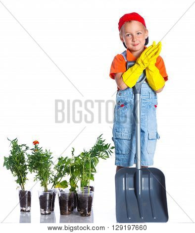Cute boy gardener planting seeds and seedlings of tomatoes and vegetable. Isolated on the white background