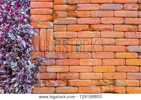 brick wall with ivy for background or texture