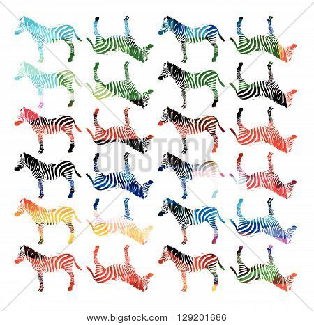 Vector illustration of colorful zebra repetitive pattern