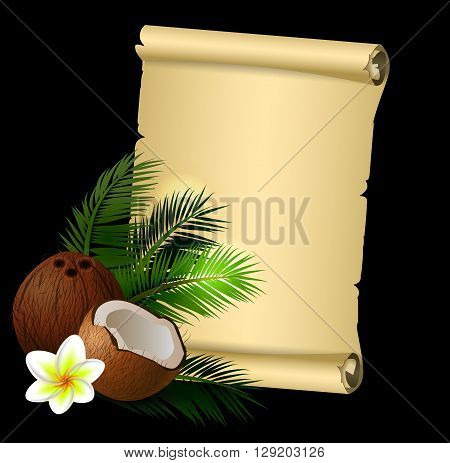 Coconut tropical nut fruit with cut vector illustration isolated with old grange paper roll on black with plumeria flower
