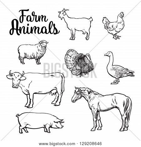 Farm animals, cow, pig, chicken, goose, poultry, livestock, color illustration, sketch style with a set of animals isolated on white background, realistic animal products for sale