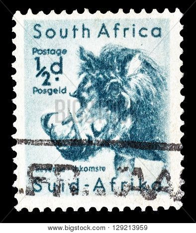 SOUTH AFRICA - CIRCA 1954 : Cancelled postage stamp printed by South Africa, that shows Wart Hog.