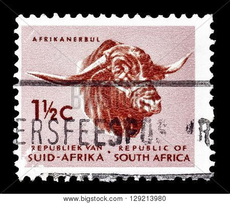 SOUTH AFRICA - CIRCA 1961 : Cancelled postage stamp printed by South Africa, that shows African bull.