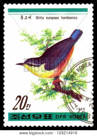 STAVROPOL RUSSIA - APRIL 30 2016: a stamp printed in DPRK shows Sitta europaea hondoensis Birds series circa 1988