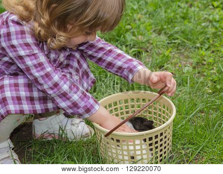 little girl stroking rabbits in a basket
