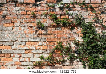Exterior brick wall in sunlilght with damage to tfhe brickwork
