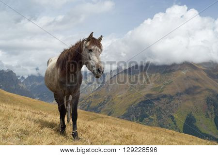 Grey horse in the mountains. Autumn landscape. Caucasus, Georgia, Zemo Svaneti