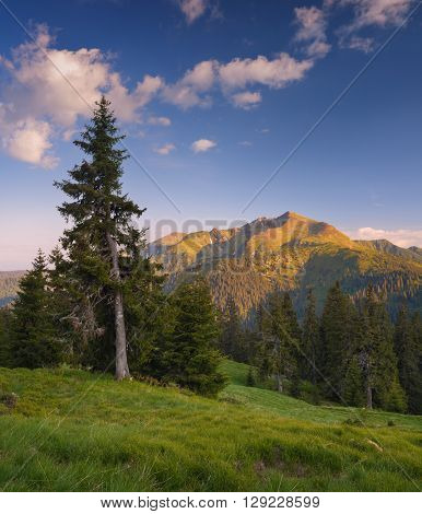 Mountain landscape. Sunny evening. Beautiful fir tree on a hill. Mountains Carpathians, Ukraine, Europe