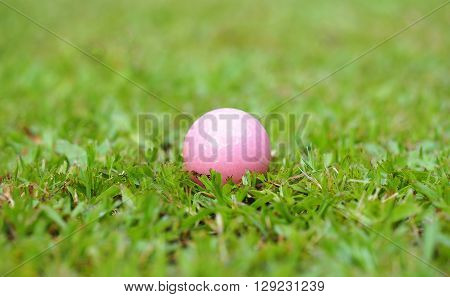Golf crystal pink ball on green grass in golf course