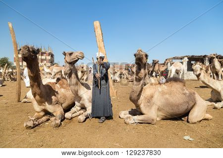 DARAW, EGYPT - FEBRUARY 6, 2016: Elderly camel salesmen with stick at Camel market.
