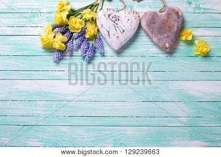 Two decorative hearts and fresh yellow and blue spring flowers on turquoise painted wooden planks. Selective focus. Place for text.