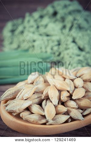 Vintage photo Macro closeup of barley grain on wooden spoon and young powder barley with grass in background healthy nutrition body detox