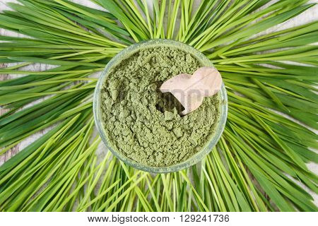 Heap of young powder barley in glass dish and barley grass healthy nutrition and lifestyle body detox