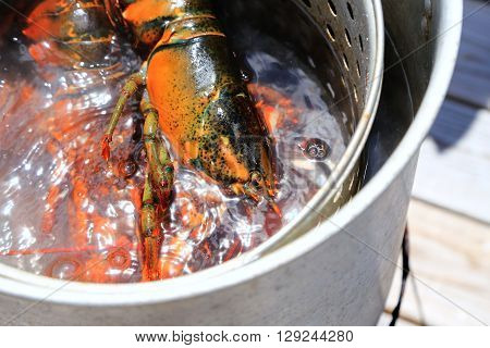Fresh Maine Lobster Boil in Aluminum Pot on a Deck