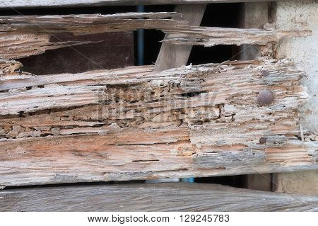 Traces of termites eat wood background, damage