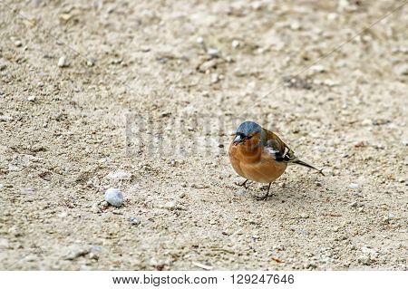 Birds Looking For Food
