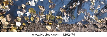 Bog And Leaves