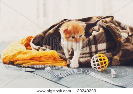 Red orange newborn kitten in a plaid blanket. Sweet adorable tiny kitten on a serenity blue wood background play with cat toy and ribbon. Small cat. Funny kitten crawling and meowing