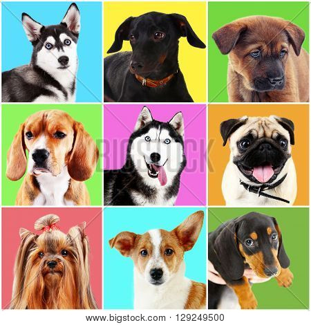 Dogs and cats portraits on bright backgrounds