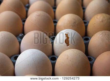 Broken Egg Chicken Egg; Eggs used in cooking.