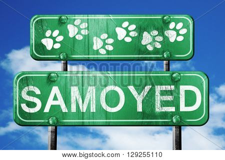 Samoyed, 3D rendering, rough green sign with smooth lines