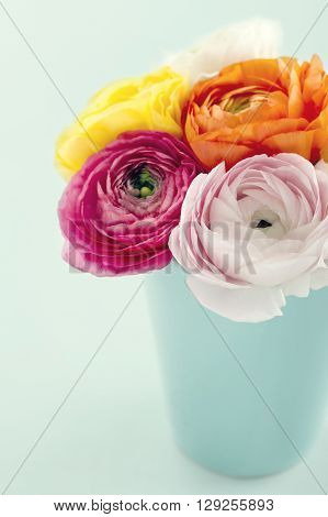 Bouquet of colorful ranunculus flowers with light blue background