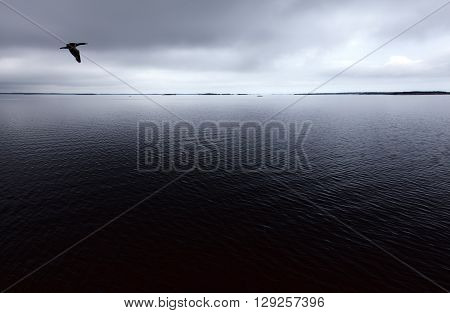The sea and islands in the horizon. Overcast sky and dark clouds. Calm sea. Cormorant in the air.