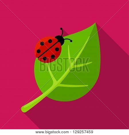 Ladybug on leaf icon illustration isolated vector sign symbol