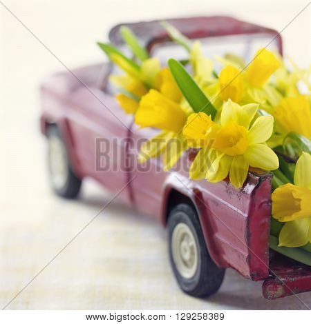 Yellow daffodils in a red vintage toy truck