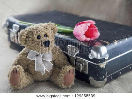 Old teddy bear with vintage suitacse and pink flower