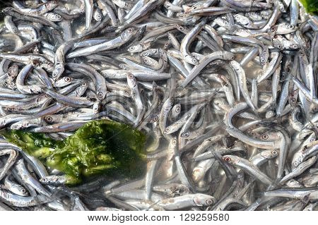 Anchovies In Market