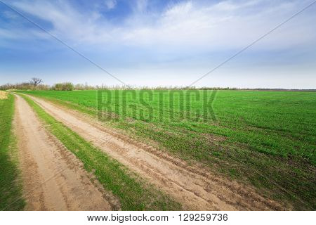Trail /  bright summer photo countryside field