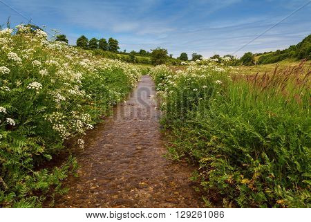 Pretty English stream running through a meadow with wild flowers and blue sky with clouds