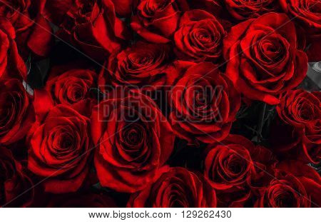 scarlet roses background. greeting card with a luxury roses. close-up. festive bouquet. background greeting card.
