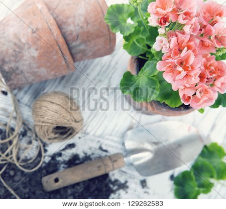 Vintage garden tools and pink geranium flowers - concept for gardening