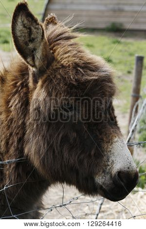 Portrait of a donkey on a farm.