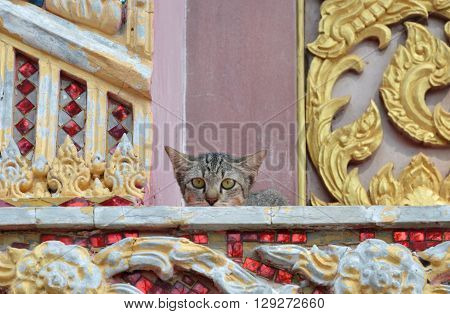 kitten hiding on church porch in Buddhist temple