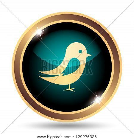 Bird icon. Internet button on white background.