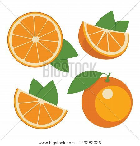 Oranges . Collection of whole and sliced orange fruits. Vector illustration.