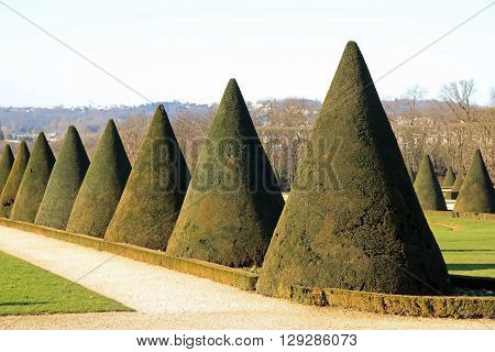 Yews trimmed cone, a French garden in summer (France)