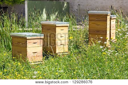 Hives in the city in a green area. A new urban beekeeping resource.