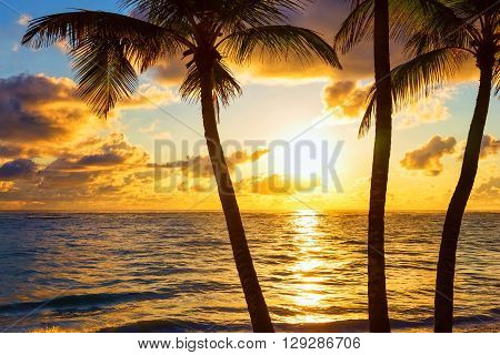 Palm Trees On Colorful Sun Set