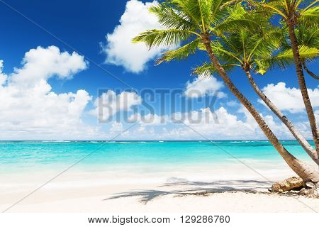 Coconut Palm Trees On White Sandy Beach I