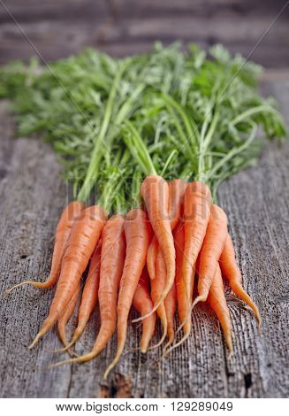 Young carrots on a wooden board
