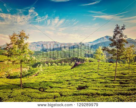 Vintage retro effect filtered hipster style image of green tea plantations in the morning, Munnar, Kerala state, India